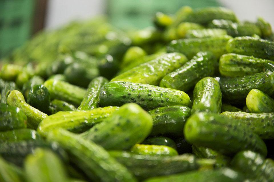 Pickle News